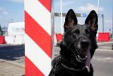Podkarpacka Straż Graniczna nagrała film o pracy swoich psów służbowych. Okazją jest Dzień Psa przypadający 1 lipca [ZDJĘCIA, WIDEO]