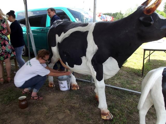 Radosne Święto Wsi 2015 w Ciechocinie [zdjęcia]Ręczne dojenie krowy to już rzadkość, dlatego jedną z atrakcji była możliwość spróbowania na sztucznym zwierzęciu