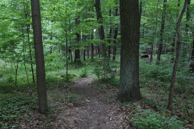 W lesie porzucono plastikowy worek, w którym były trzy szczeniaki.