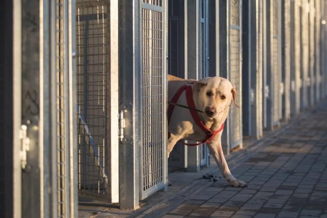 Nowe schronisko dla zwierząt składa się z pięciu segmentów: dwóch administracyjno-gospodarczych (w tym gabinet weterynaryjny) oraz trzech z boksami dla zwierząt.