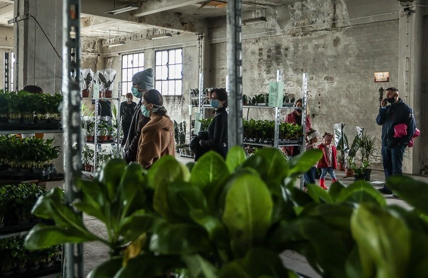 Festiwal Kwiatów i Roślin znowu z Gdańsku. Tym razem odbywa się w budynku B90 na terenie gdańskiej stoczni. Zdjęcia