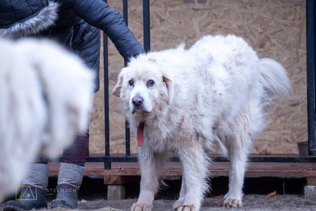 Baca trafił pod skrzydła Fundacji Człowiek Dla Zwierząt i powoli uczy się, że opiekun może być najlepszym przyjacielem.