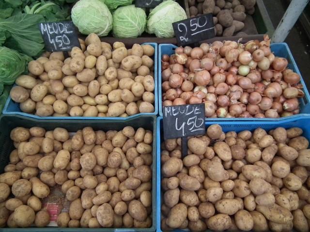 W tym roku warunki pogodowe dla wegetacji ziemniaków przemysłowych były sprzyjające.