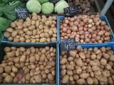 Dobre zbiory ziemniaków. Ale nie ich jakość