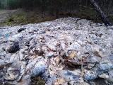 Skandal! 700 kg ryb i odpadów z ryb ktoś wyrzucił w lesie 35 km za Bytowem (zdjęcia)