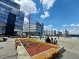 Katowice. Na placu Kwiatowym na rynku są już nowe drzewa. To wiśnie i klony