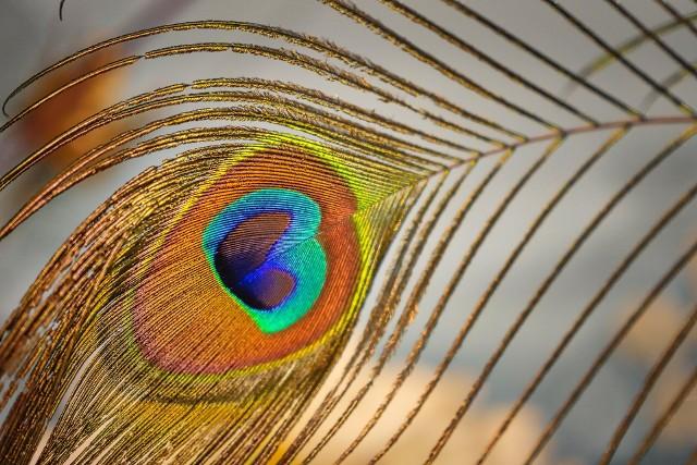 Pawie pióra oznaczają śmierćCo przynosi pecha w domu? 10 rzeczy, których powinieneś pozbyć się z domu, jeśli chcesz być w nim szczęśliwy