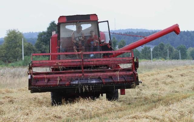 Plony wszystkich zbóż w tym roku były niższe. Stosunkowo najmniej ucierpiała pszenica
