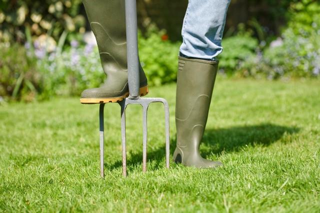 Żeby trawnik był piękny i bujny, musimy zadbać o niego tak jak i o roślinny ozdobne. Szczególnie ważne jest nawożenie.