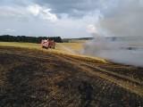 Strzelce Krajeńskie: tylko w dwa dni doszło do trzech pożarów upraw rolnych. Skala zniszczeń jest ogromna