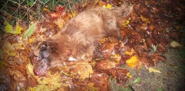 Interwencja w Budziwojowicach. Pies znaleziony przy drodze