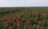 """Podkarpackie lasy ucierpiały podczas burz. Fatalne skutki gradobicia. Leśnicy: """"Drzewa obumierają na naszych oczach"""" [ZDJĘCIA]"""