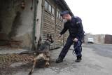"""Policyjny pies to ekspert od tropienia, wykrywania narkotyków i najlepszy przyjaciel. """"Jak baba wkurzy, to idzie się pogadać z psem"""""""