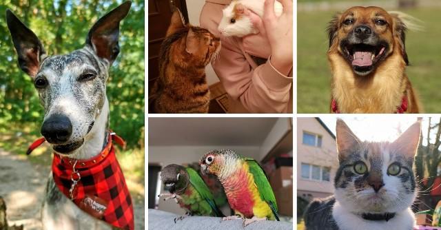 Światowy Dzień Zwierząt 2021. Zobacz zdjęcia uroczych pupili internautów gs24.pl!