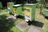 Tysiące martwych pszczół pod Środą Śląską