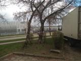 Białystok. W 2020 roku miasto wydało zgody na wycięcie 900 drzew. Wnioskowały o nie spółdzielnie, firmy, instytucje, parafie