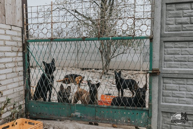Zdjęcia z interwencji wolontariuszy Fundacji Na Rzecz Ochrony Praw Zwierząt EX LEGE w hodowli psów ras użytkowych (1 maja b.r.)