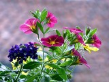 Kwiaty na balkon. 33 pomysły na roślinne kompozycje. Zainspiruj się