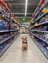 Pierwszy sklep dla zwierząt Maxi Zoo otwiera się w Gliwicach!  Na mieszkańców czekają wyjątkowe atrakcje