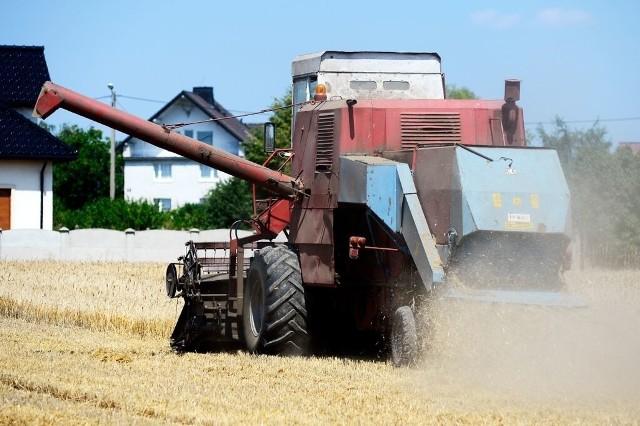 Rolnicy załamują ręce i liczą straty