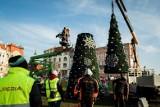 Uwaga, dziś utrudnienia w ruchu okolicy ulicy Karmelickiej w Bydgoszczy. Drogowcy będą wywozić miejską choinkę z Placu Teatralnego!