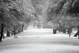 Prognoza długoterminowa na styczeń 2021. Wraca zima! Śnieg i mróz na dłużej