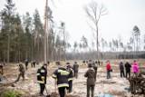 Ekolodzy: Puszcza Białowieska uroczyście zmieniana w plantację przez resort Szyszki (zdjęcia)