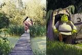 Chatka Shreka na Śląsku? Tak. Dobrze ukryta na moczarach
