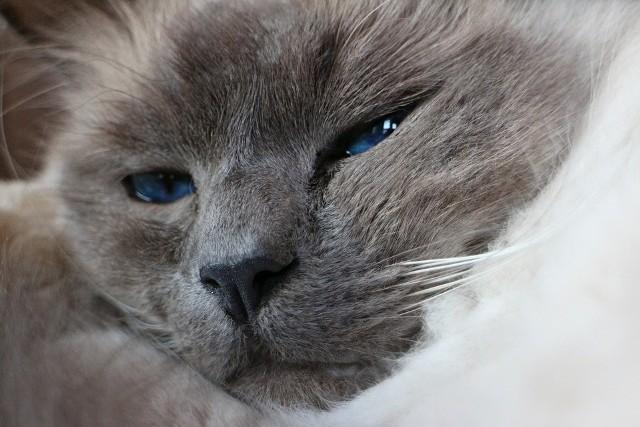 Sierść kotaSierść zwierząt domowych należy systematycznie usuwać. To ważne nie tylko ze względów estetycznych, ale również istotne dla naszego zdrowia.
