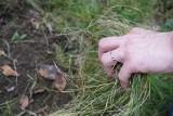 W marcu trawnik budzi się z uśpienia. Jak zadbać o trawę w ogrodzie?