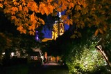 Tak wygląda pięknie oświetlony Ogród Botaniczny [ZDJĘCIA]