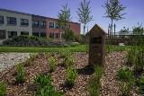Pozytywny ogród w gdańskiej Pozytywnej Szkole Podstawowej. A w nim ścieżki sensoryczne, domki dla owadów oraz szklarnia z warzywnikiem