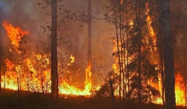 Na obszarach leśnych należących podlegających pod Regionalną Dyrekcję Lasów Państwowych w Szczecinie wprowadzono III  (najwyższy) stopnia zagrożenia pożarowego.