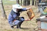 Miody i inne produkty pszczele - ile wiemy o ich mniej i bardziej znanych właściwościach i zastosowaniu?