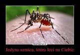Plaga komarów! Krwiopijcy atakują stadami w całym Lubuskiem