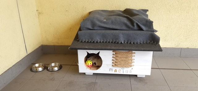 Kot Maciek od lat mieszka w siedzibie Sosnowieckich Wodociągów.