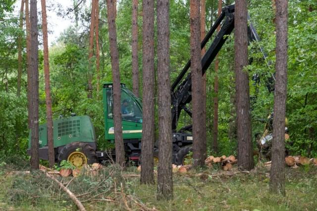 Chodzi głównie o pozyskanie drewna tzw. niepełnowartościowego czyli świerka i sosny, które królują w wielkopolskich lasach, zwłaszcza w Puszczy Noteckiej. Od miesięcy leśniczowie w wyniku suszy wycinają znaczne ilości zamierających drzew. Te, gdyby były sprzedawane do elektrowni, podreperowały budżet Lasów Państwowych.