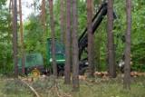 Polska wróci do palenia węglem i drewnem? Drewno z lasów ma trafiać do elektrowni. Naukowcy PAN alarmują: biomasa szkodzi środowisku
