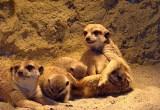 55. urodziny Śląskiego Ogrodu Zoologicznego od piątku [PROGRAM, ZAPOWIEDŹ]