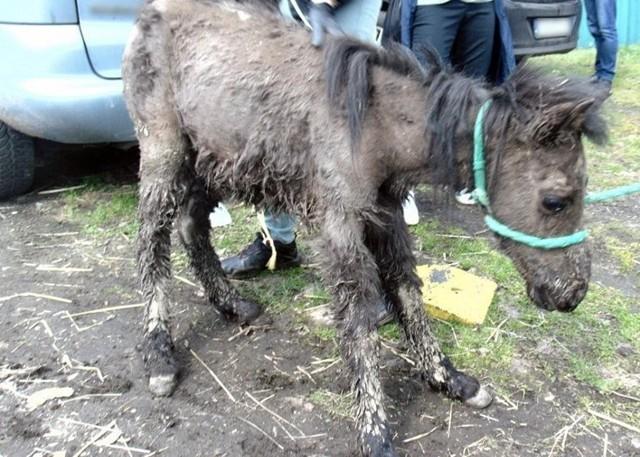 53-latek znęcał się nad zwierzętami. W swoim ogródku trzymał w tragicznych warunkach aż 13 zwierząt.