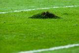 Były groundsman Tottenhamu: Murawa na PGE Narodowym nie ma szans przeżyć dłużej niż kilka miesięcy