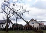 Skutki wichury w województwie śląskim: brak prądu, zatrzymane pociągi i uszkodzone domy. Niż Julia zaatakował