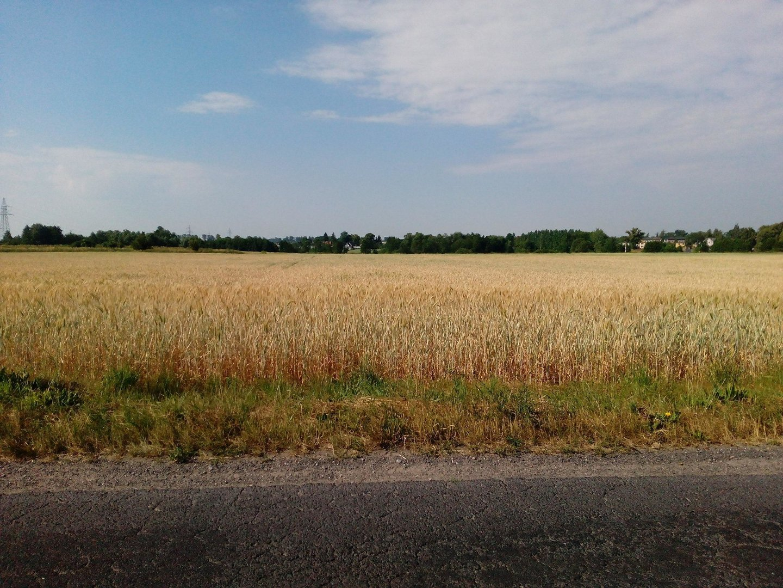 Cudowna Ile kosztuje hektar ziemi rolnej? Ceny od czerwca 2018 w WE28
