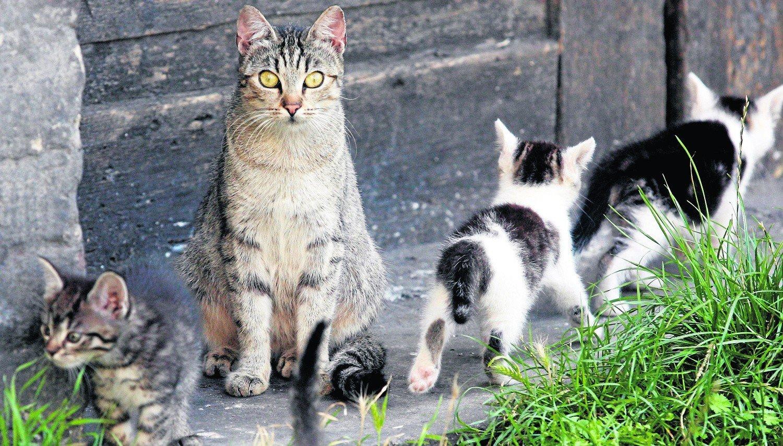 4f89618cdfa449 Bezdomnym kotom trudno przetrwać w minusowych temperaturach, zwłaszcza w  nocy. Otwórzmy więc im piwnice