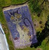 Stalowa Wola. Kot z bratków w Parku Miejskim wygląda fantastycznie! (ZDJĘCIA)