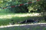 Zwłoki w Parku Zwierzynieckim w Białymstoku. Znamy przyczynę śmierci 46-letniego mężczyzny (zdjęcia)