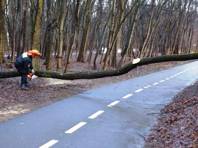 Strażnicy mając na uwadze bezpieczeństwo rowerzystów, przy użyciu piły łańcuchowej pocięli drzewo na mniejsze kawałki i złożyli drewno na poboczu ścieżki.