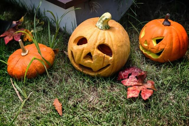 Dyniowy Zawrót Głowy Jak Przygotować Dynię Na Halloween