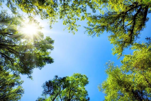 Czy lasy będą zamknięte z powodu suszy? Rzecznik LP tłumaczy