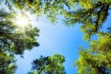 Czy lasy będą zamknięte z powodu suszy? Czy czekają nas masowe pożary? Rzecznik Lasów Państwowych tłumaczy